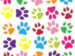 ペット 犬 猫 足跡